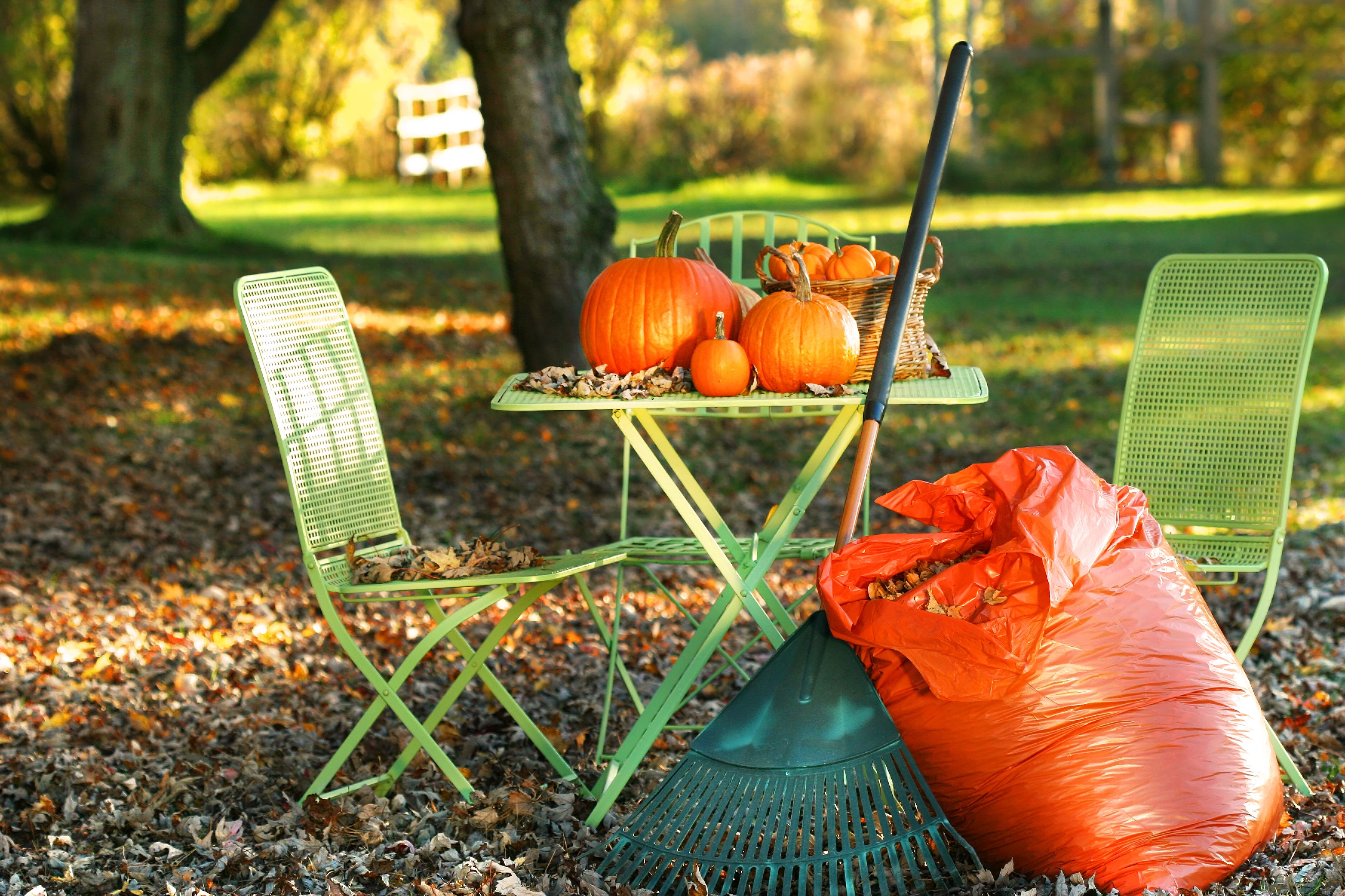 Fall Home Clean up Dumpster Rental Baltimore